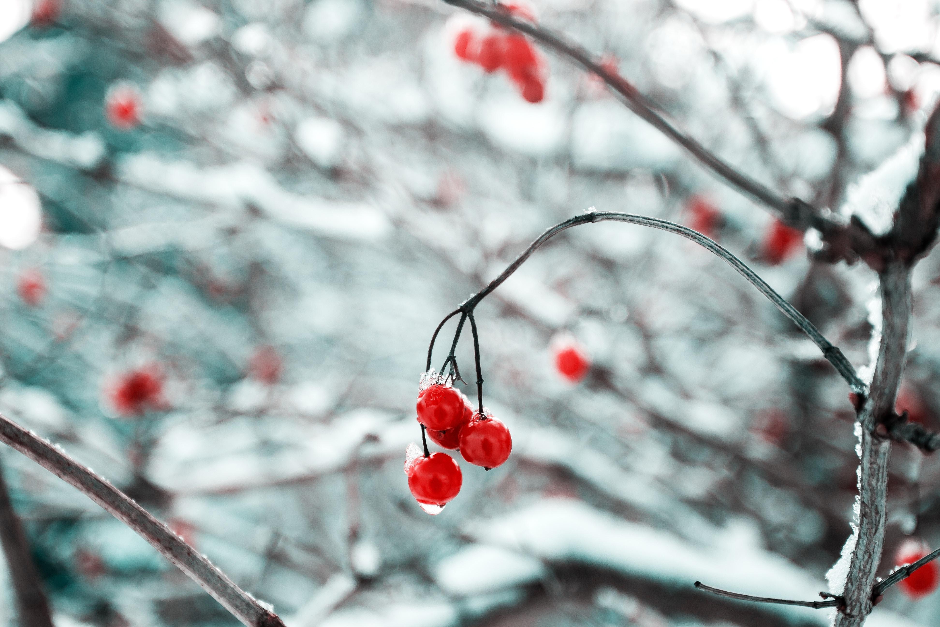 Un jardin féerique pour Noël
