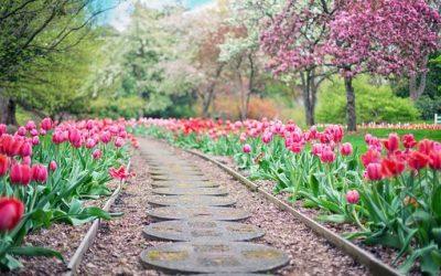 Garder son jardin vert plus longtemps