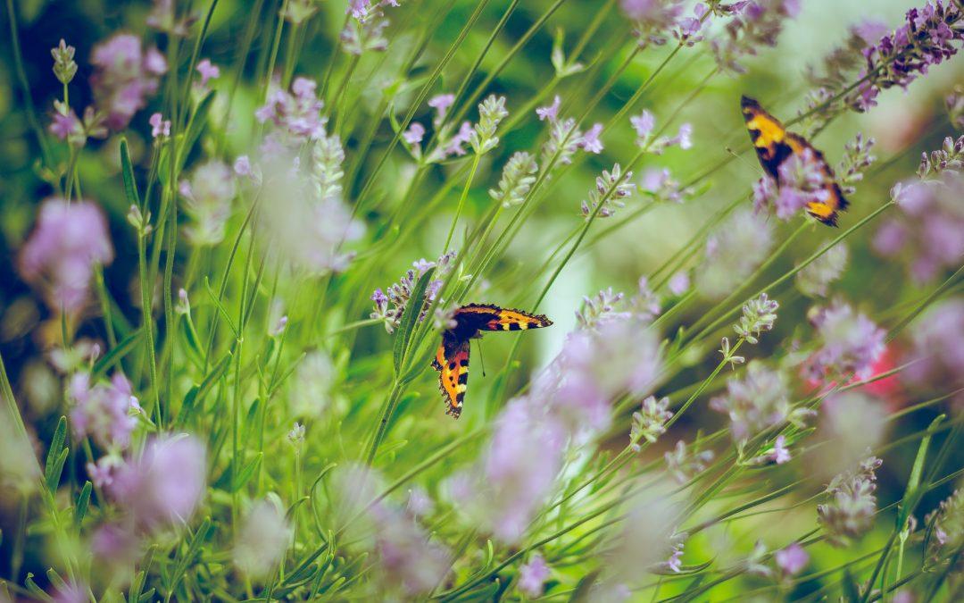 Entretenez efficacement votre jardin