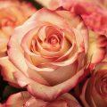 fleur-rose-artificielle