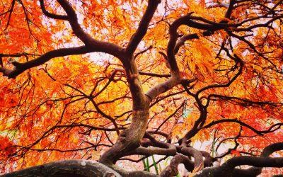 Entretenir son jardin en automne