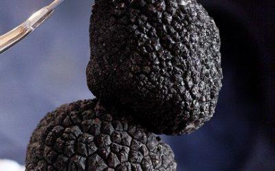 Comment faire pousser des truffes à la maison?