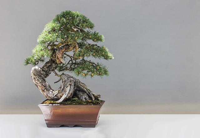 Les bonsaïs, de véritables arts dans vos jardins